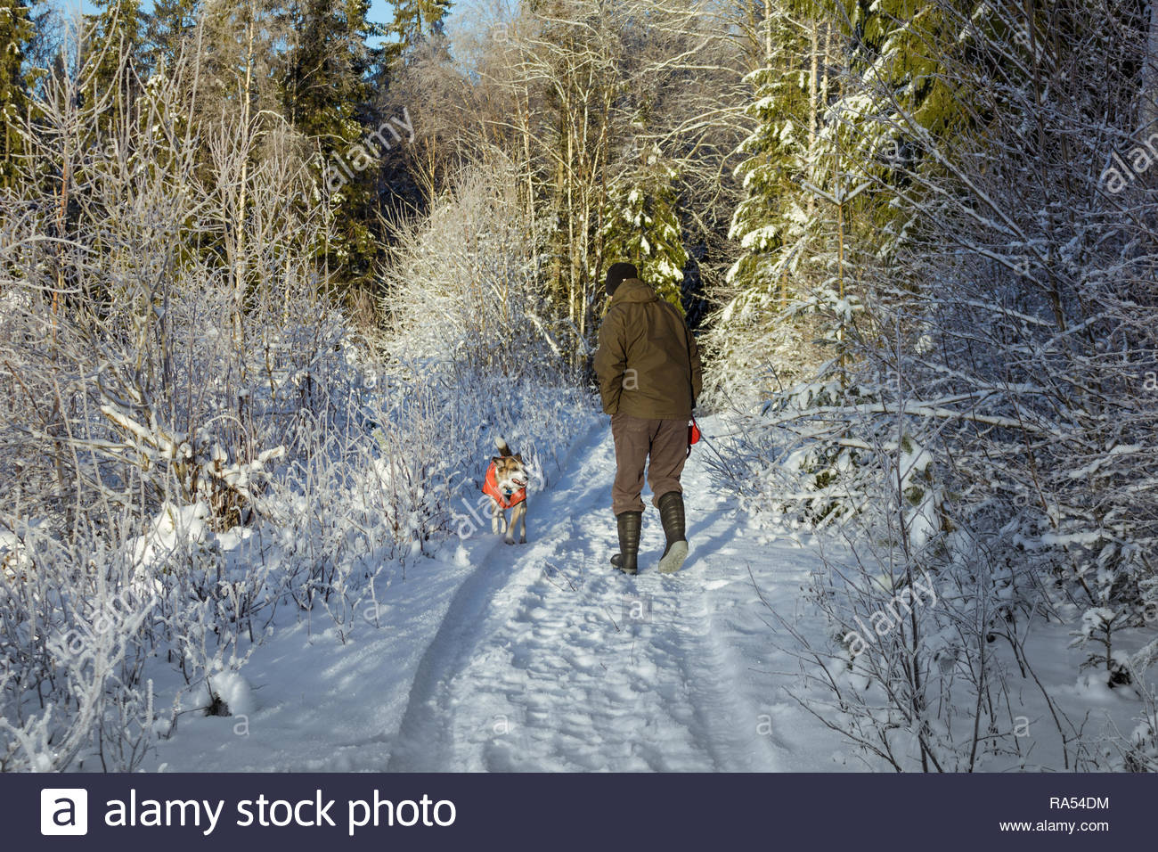 winterwalk through deep snow with a man and a dog - Stock Image