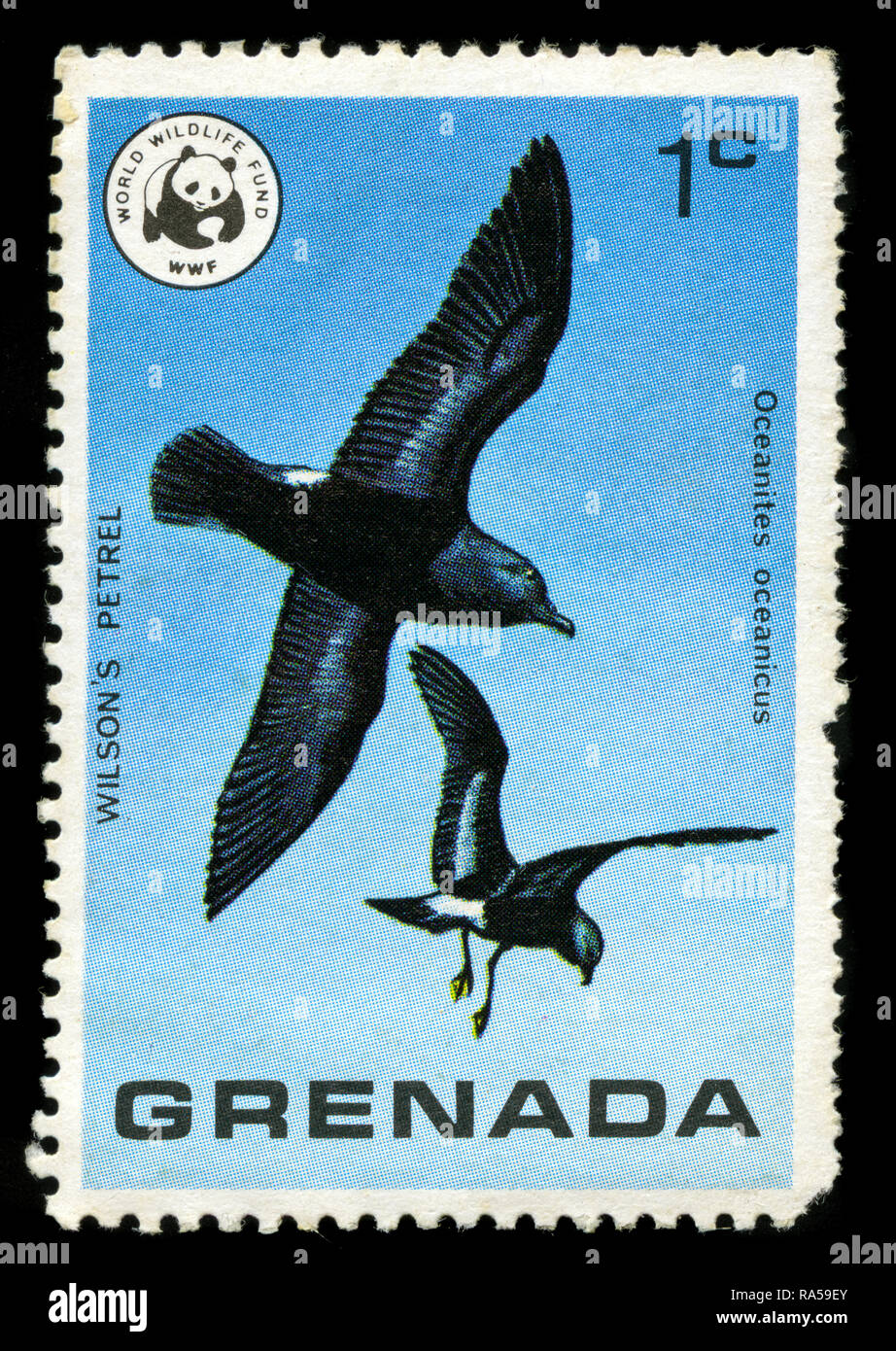 Postage stamp from Grenada in the Wild Birds of Grenada series issued in 1978 - Stock Image
