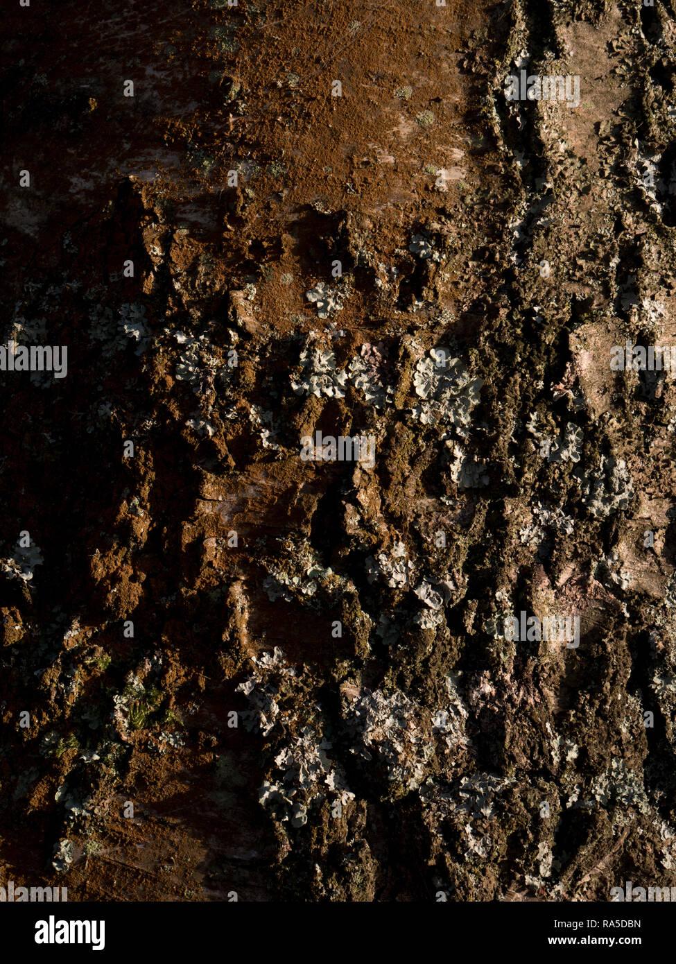 Texture - tree bark Stock Photo