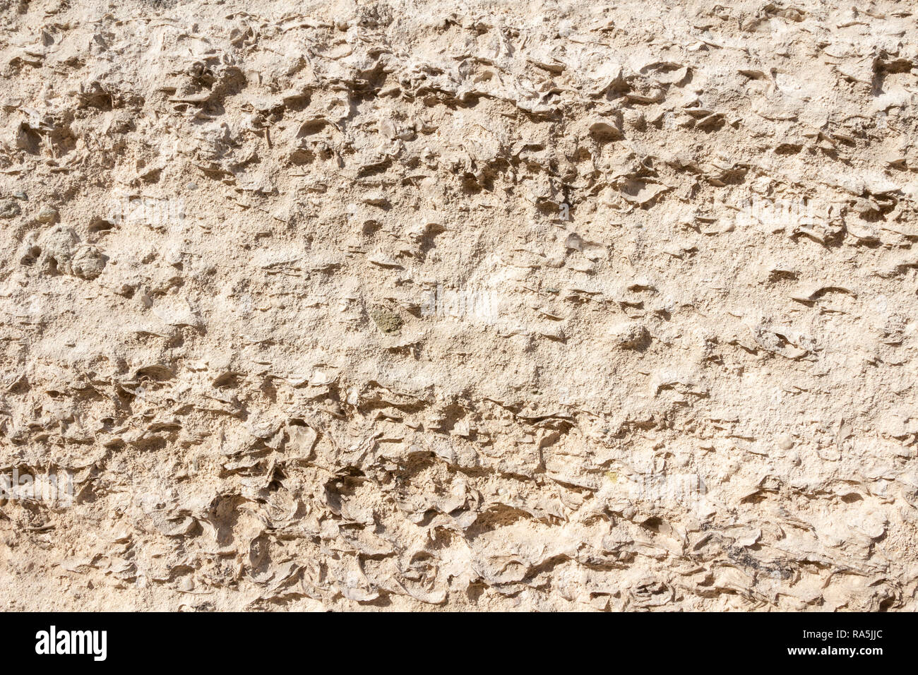 Natural limestone surface in the ground. The ancient shells can clearly be seen. The stone formed 13–16 million years ago, in the Miocene era. - Stock Image