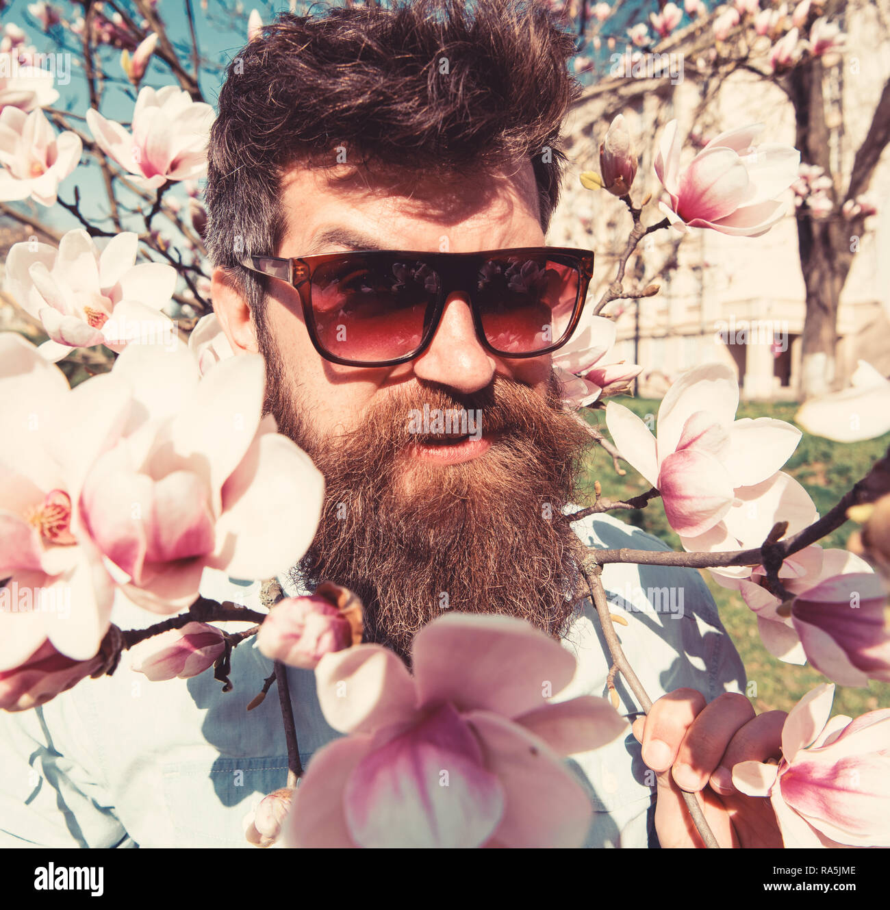 Brutal macho smiling near tender flowers on sunny day. Man with beard and mustache wears sunglasses, magnolia flowers background. Brutality and tenderness concept. Hipster with fashionable sunglasses. - Stock Image