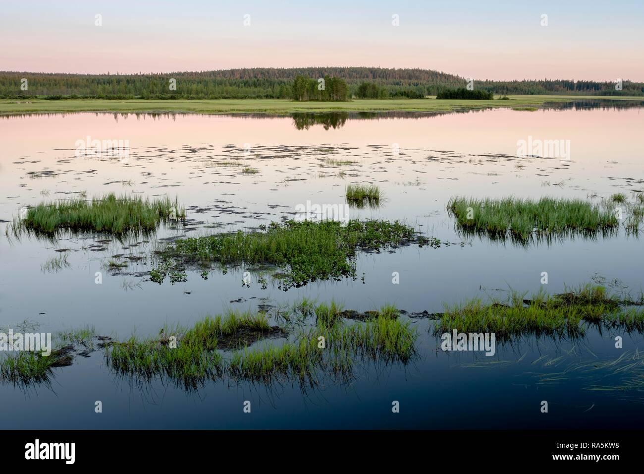 Sunset, grass tufts in the lake, lake landscape, wetlands, Kiantajaervi, Ruhtinansalmi, Lapland, Finland - Stock Image