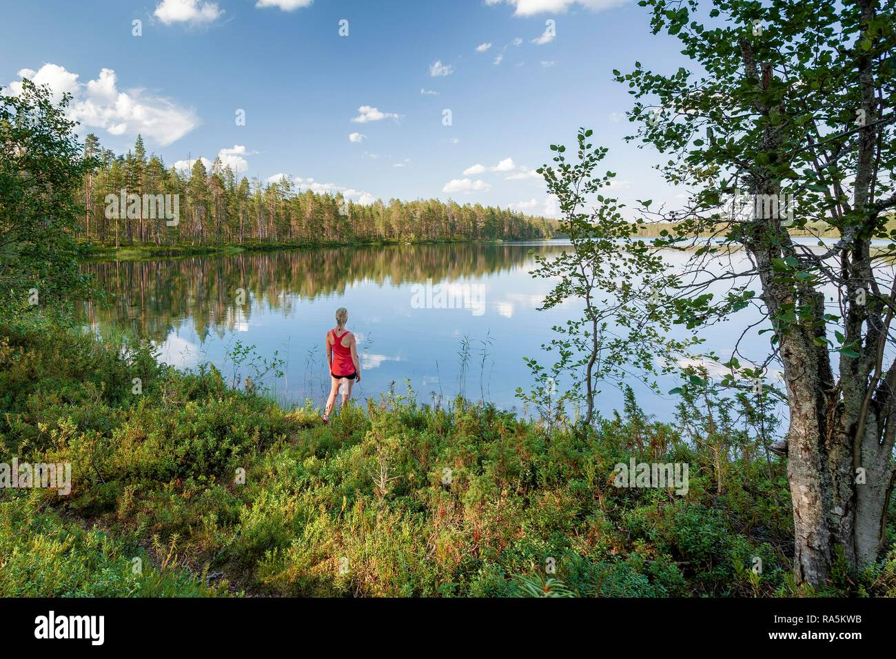 Middle-aged woman standing at the lake, forest, trees reflecting, Hossa National Park, Ruhtinansa, Suomussalmi, Kainuu, Finland - Stock Image