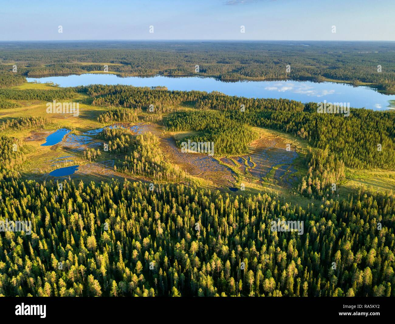 Drone shot, conifers in wetland with lake, boreal, arctic forest, Suomussalmi, Kainuu, Finland - Stock Image
