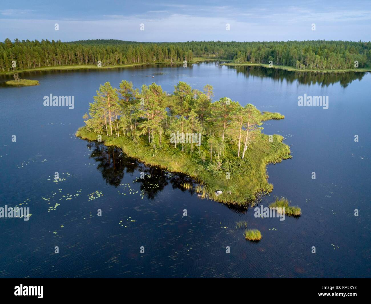 Drone shot, boreal, arctic conifers on small island in lake, water lily leaves, Jävre, Norbottens län, Sweden - Stock Image