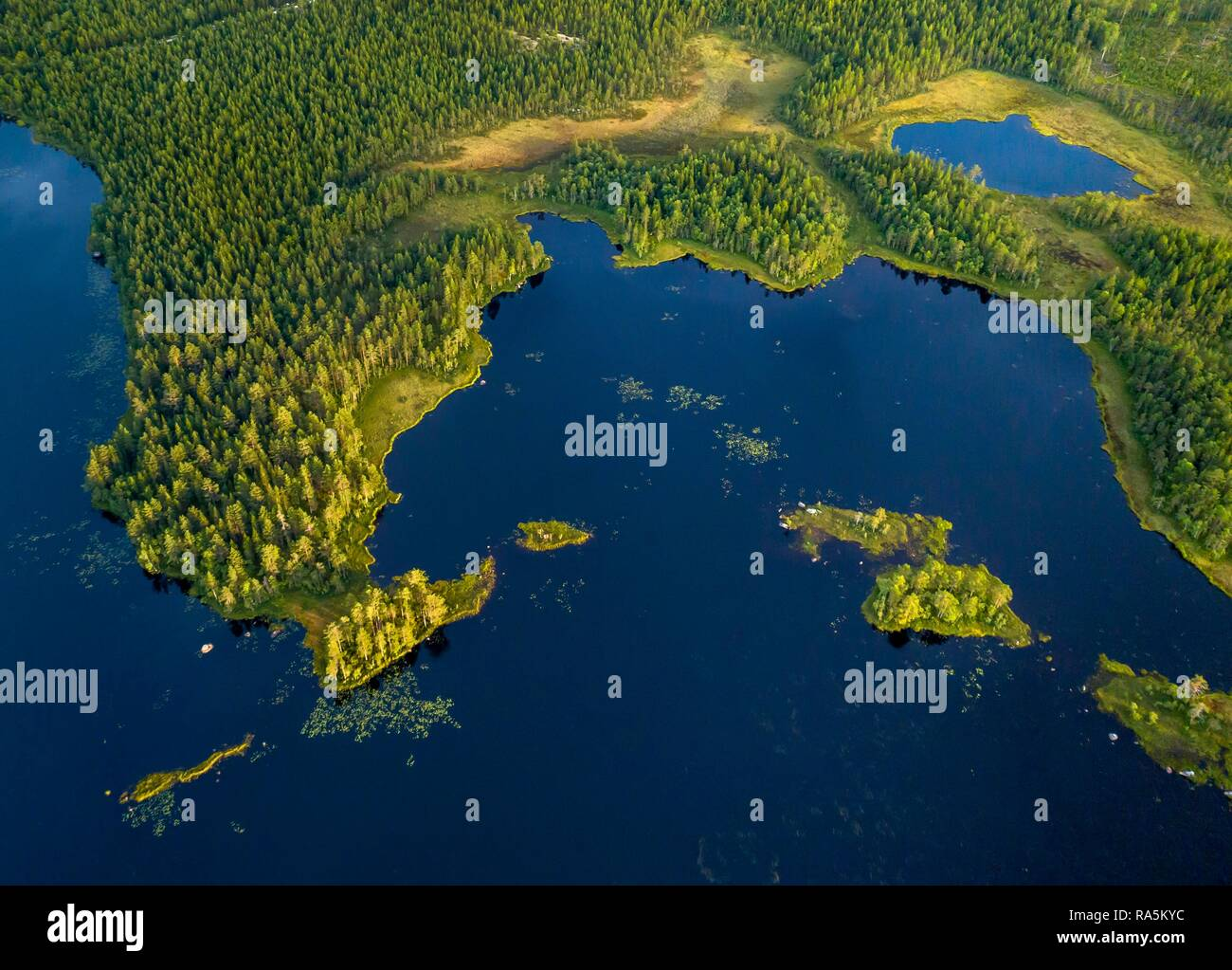 Drone shot, boreal, arctic conifers in wetland at the lake with small islands, Jävre, Norrbottens län, Sweden Stock Photo