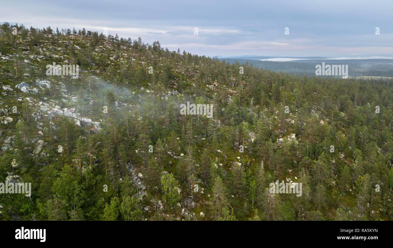 Drone shot, boreal, arctic conifers with fog, forest, Salla, Lappi, Finland - Stock Image