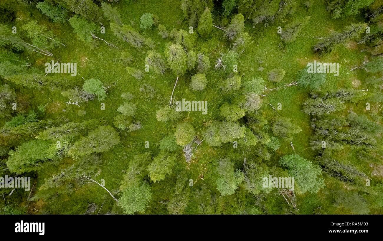 Drone shot, boreal, arctic conifers, forest, moss, wetland, salla, Lappi, Finland, Finland Stock Photo