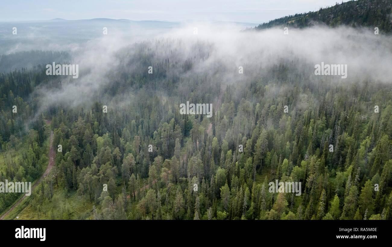 Drone shot, fog in boreal arctic forest, conifers, Salla, Lappi, Finland - Stock Image
