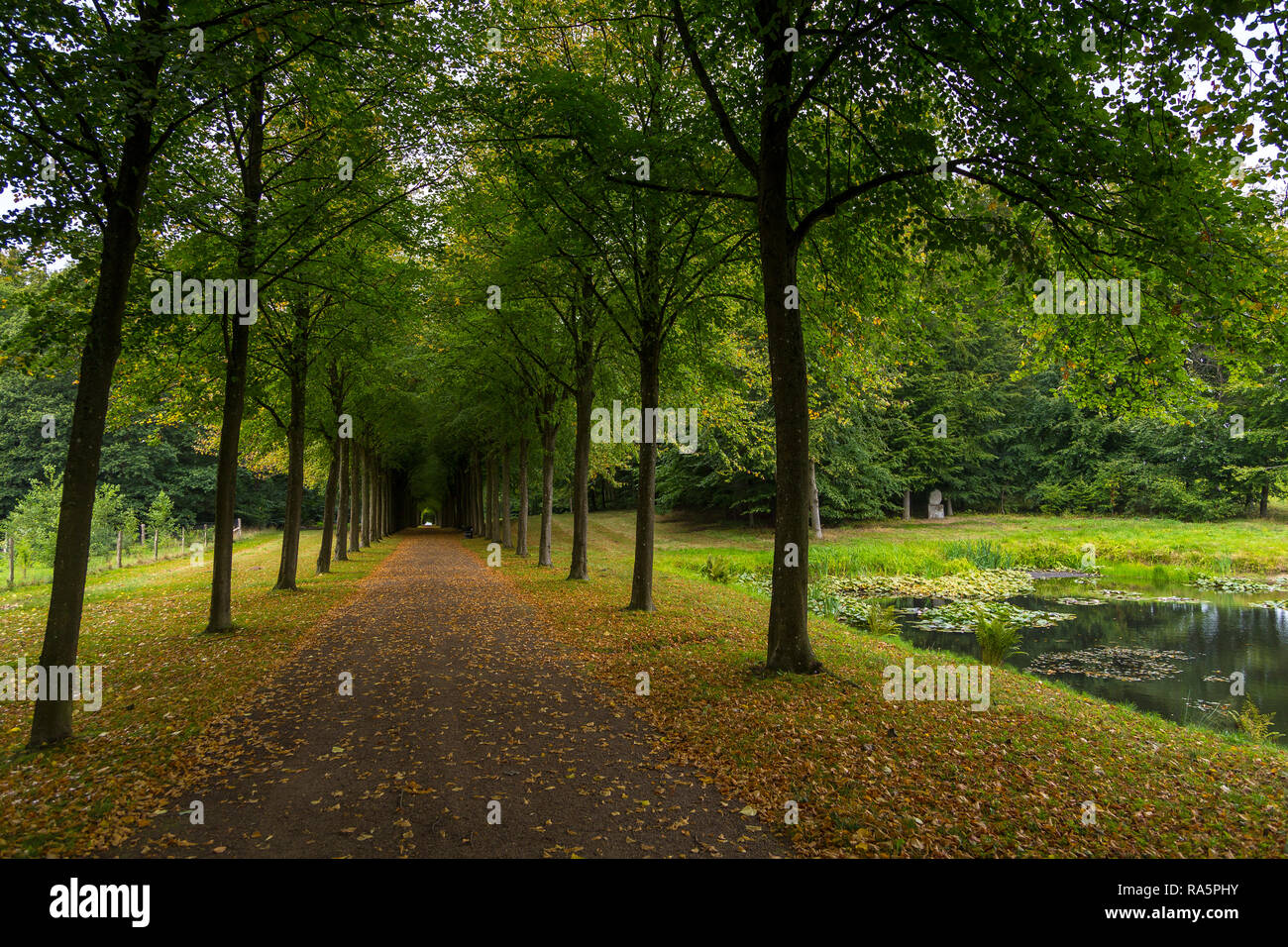 Long avenue in Palace gardens. The largest historical gardens in the Baroque style, Fredensborg, Denmark. - Stock Image