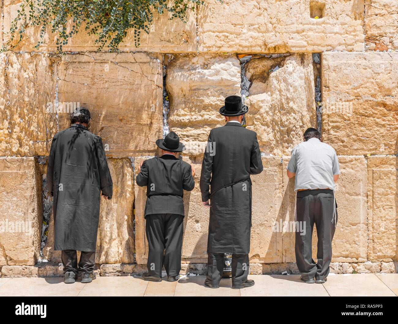 Praying Orthodox Jews at the Wailing Wall, Jerusalem, Israel - Stock Image