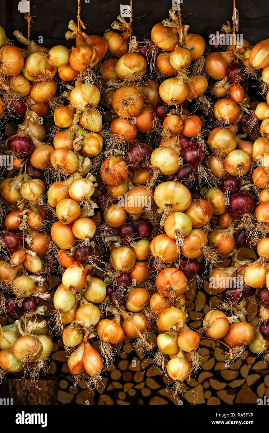 Red and white onions, tied to plaits, onion plaits, Greding, Middle Franconia, Franconia, Bavaria, Germany - Stock Image