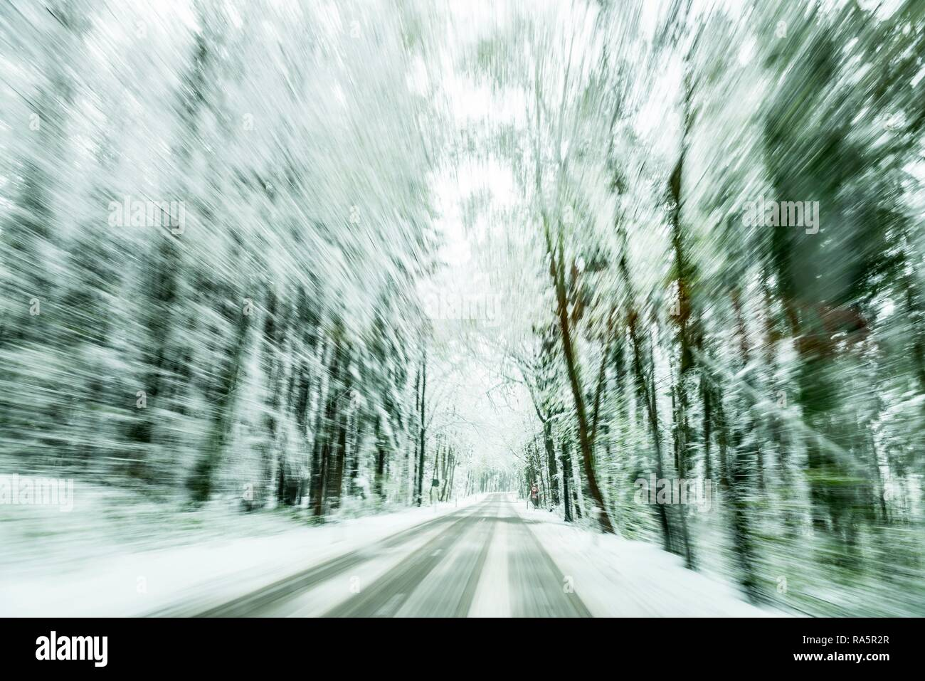 Snow-covered road in snow-covered forest, slippery road, Unterallgäu, Bavaria, Germany - Stock Image