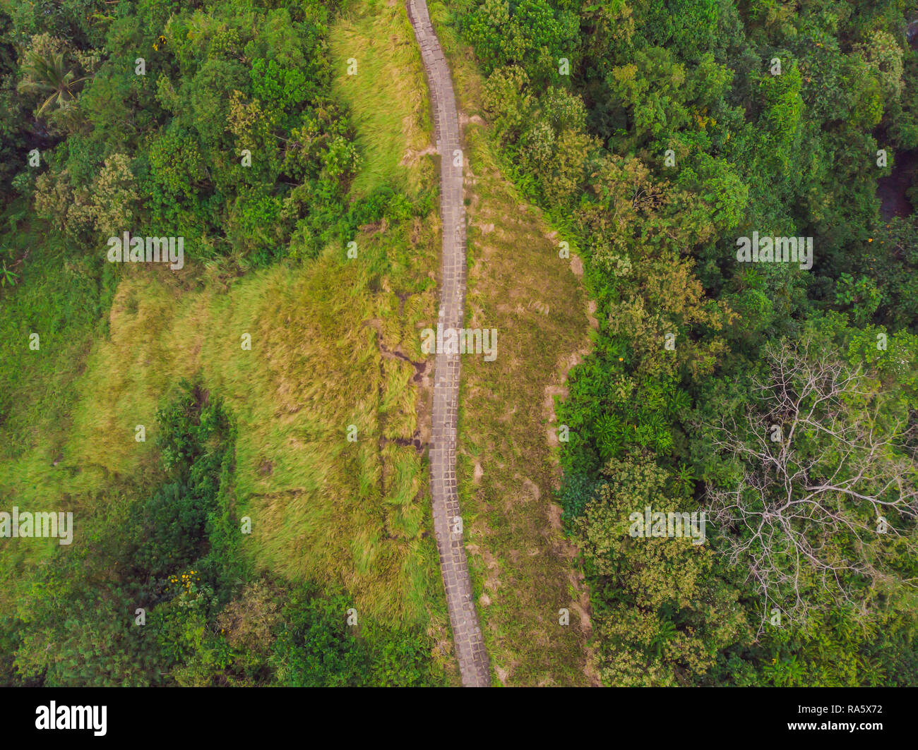 Aerial picture of Campuhan Ridge Walk , Scenic Green Valley in Ubud Bali. Photo from the drone - Stock Image