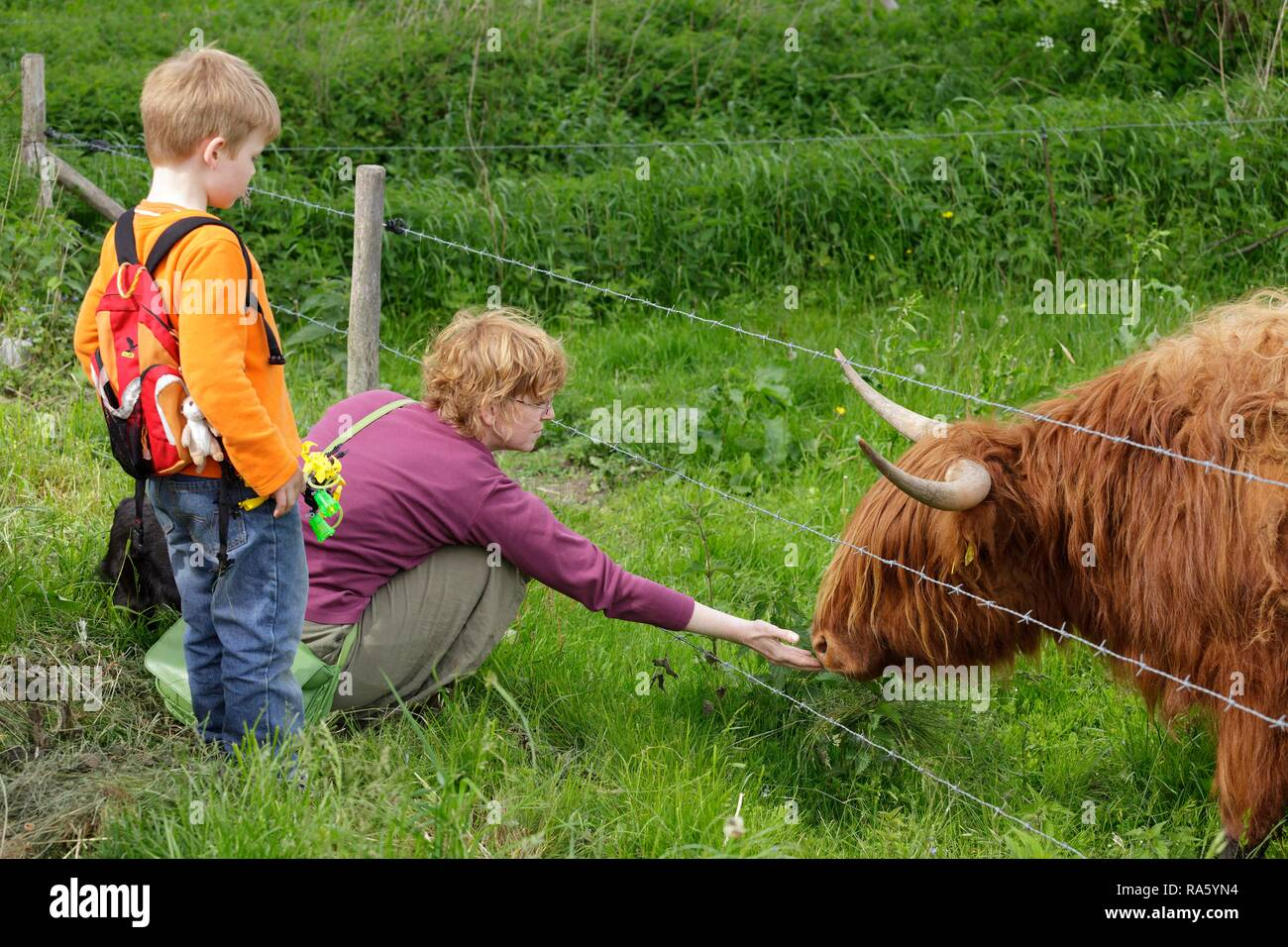 Woman stroking a Highland Cattle with a boy watching, Haithabu, Schleswig-Holstein, Germany - Stock Image