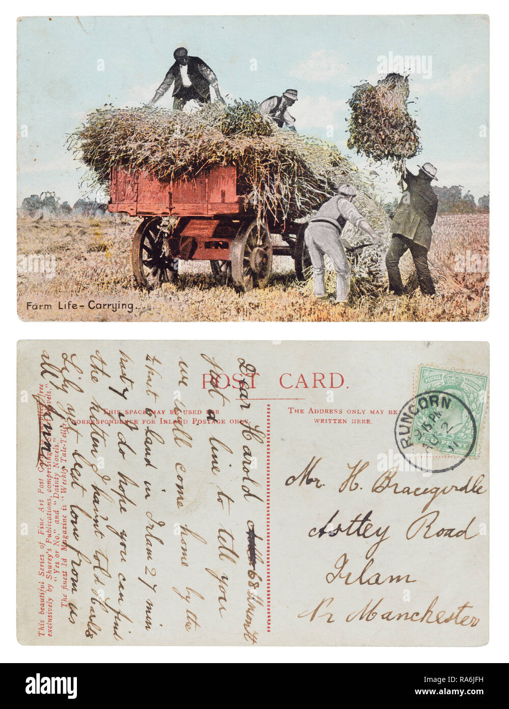 Postcard sent in 1911 from Runcorn to Harold Bracegirdle, Astley Road, Irlam, Manchester showing farm life, carrying and mentioning lost kitten - Stock Image