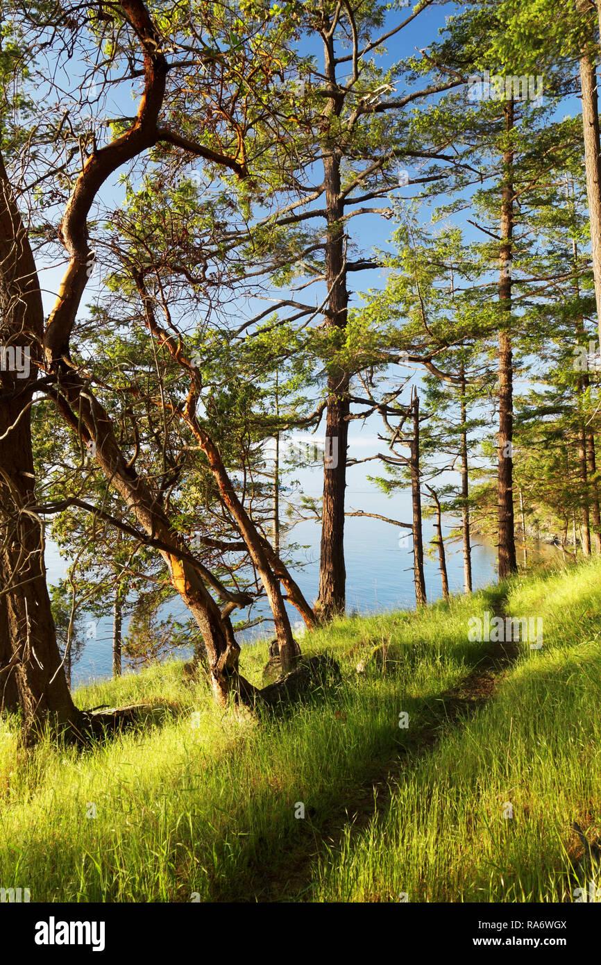 Trail along grassy shoreline, Jones Island Marine State Park, San Juan Islands, Washington State, USA - Stock Image