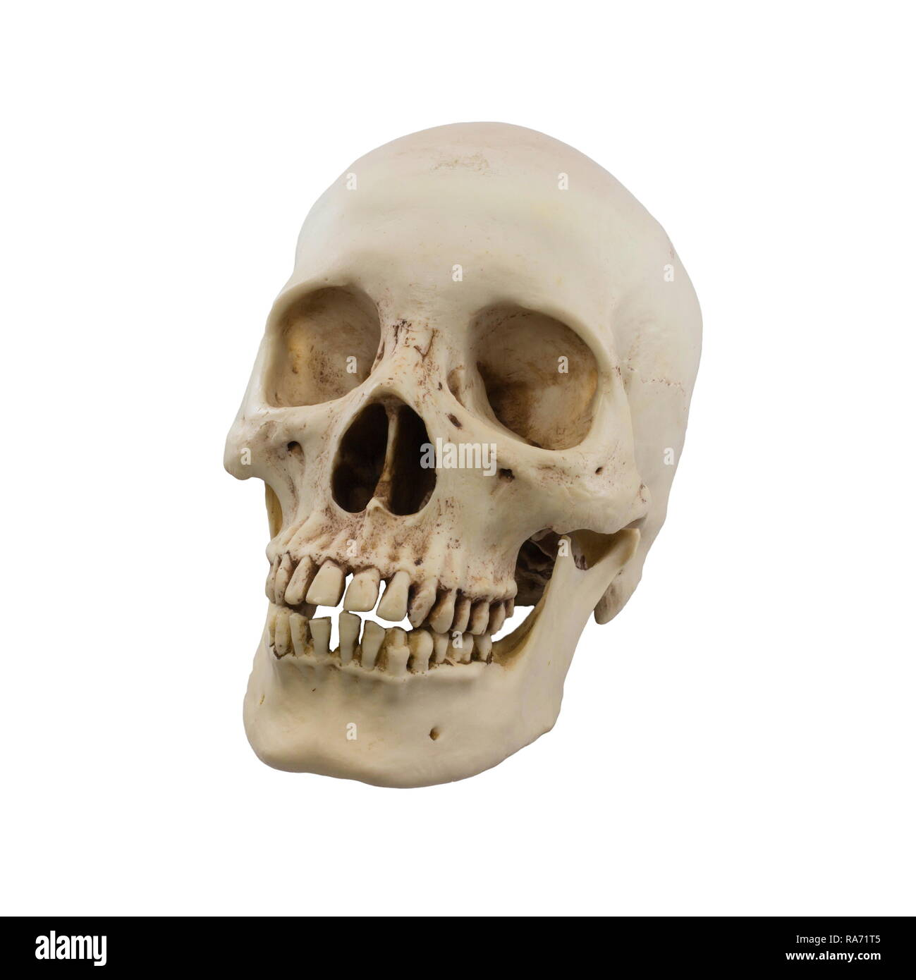 Human skull isolated on a white background. - Stock Image