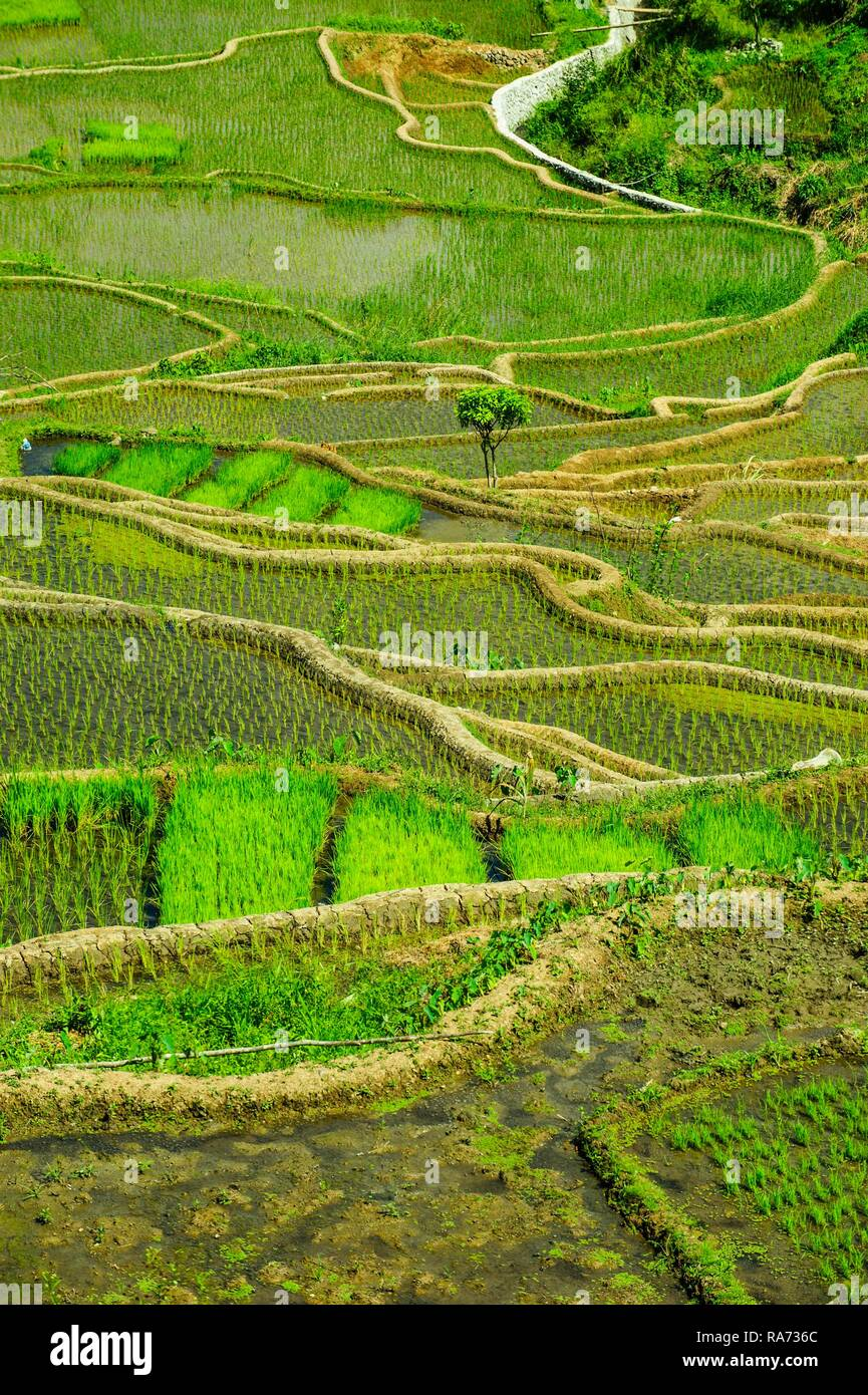 Rice terraces of Banaue, Northern Luzon, Philippines - Stock Image