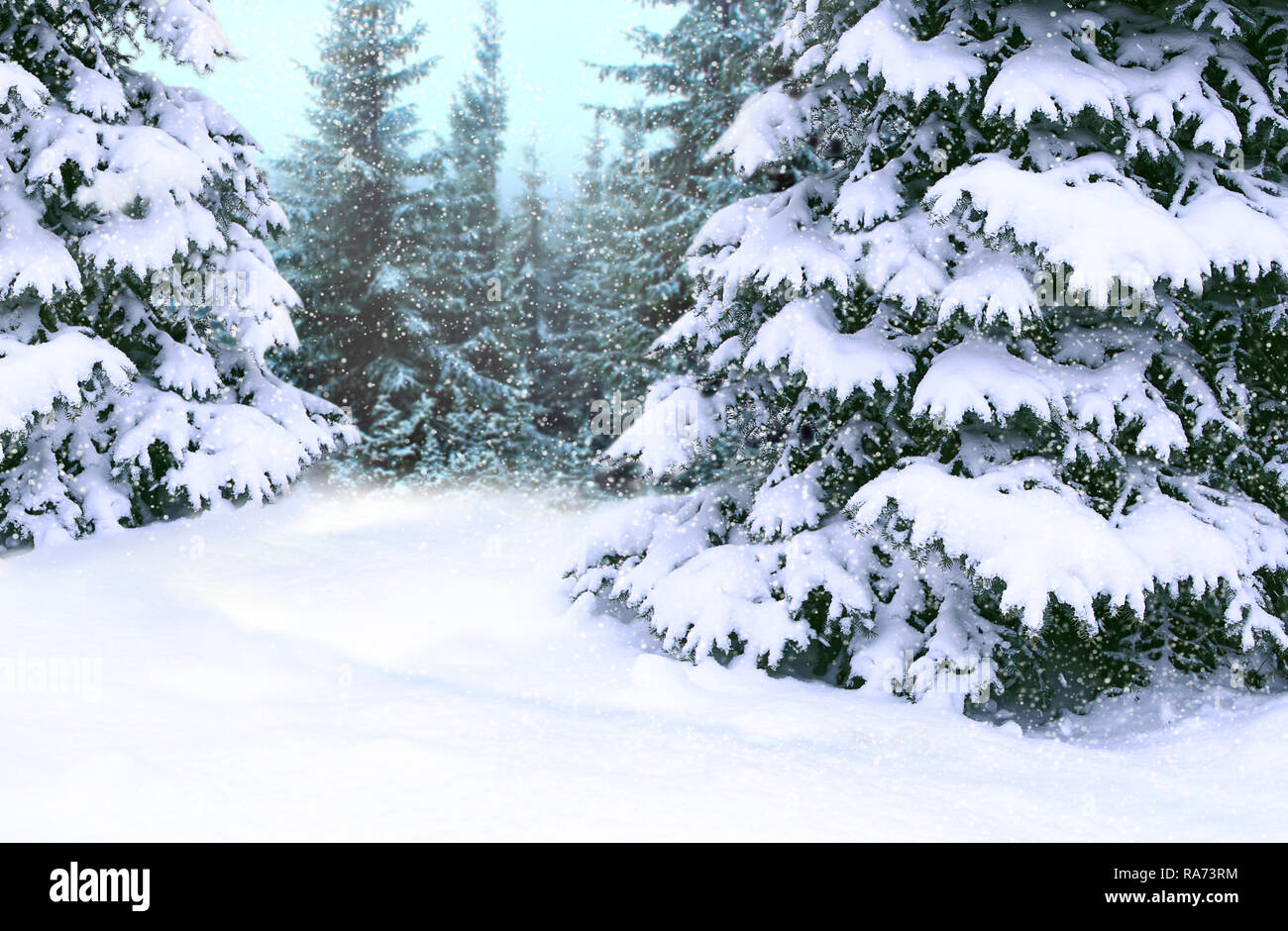 Beautiful Winter Forest Spruces Covered By White Snow In Wood