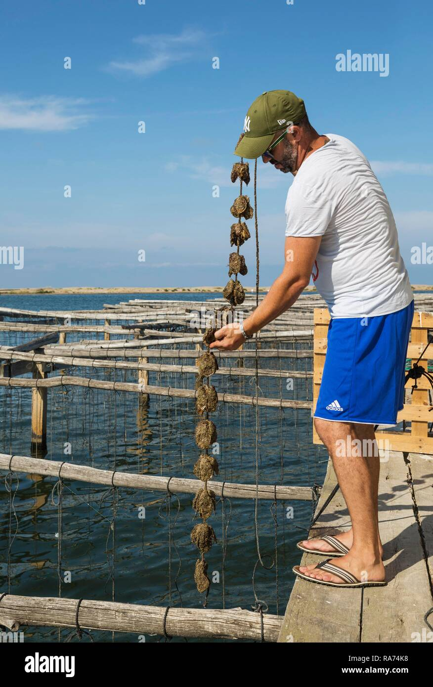 Oyster farming in the Bahia del Fangar, environs of the Ebro Delta Nature Reserve, Tarragona province, Catalonia, Spain Stock Photo