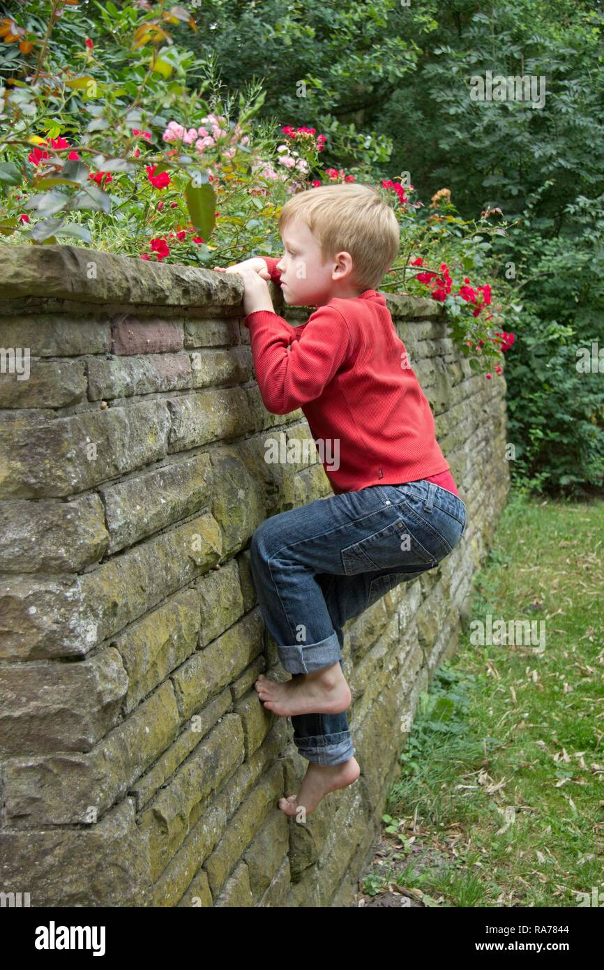 Young boy climbing a wall, Seedorf, Schleswig-Holstein - Stock Image
