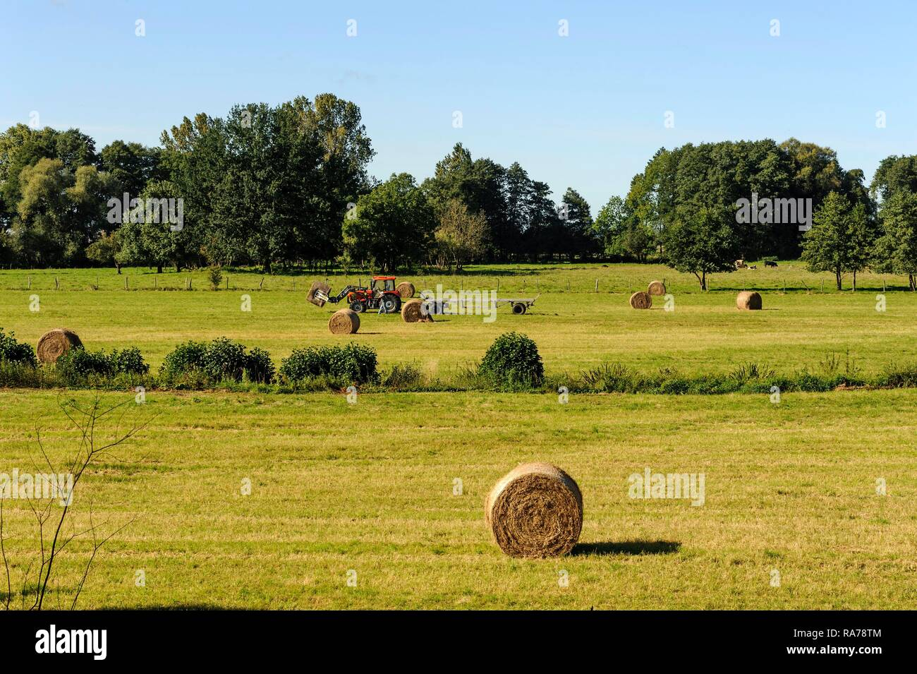 Pastureland in the Warta River Mouth National Park, Park Narodowy Ujście Warty, Lubusz voivodeship, Poland, Europe - Stock Image