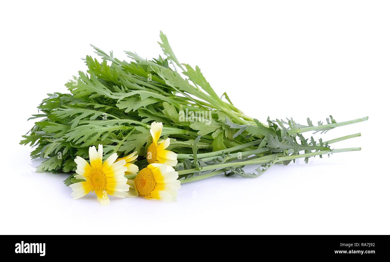 Chrysanthemum coronarium on white background - Stock Image