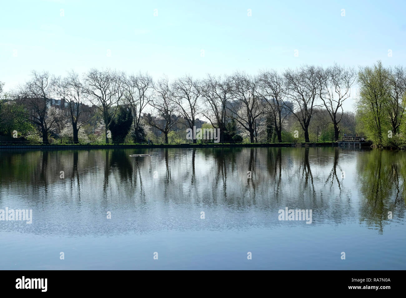 Reflection of trees in a pond, Hampstead Heath, London - Stock Image