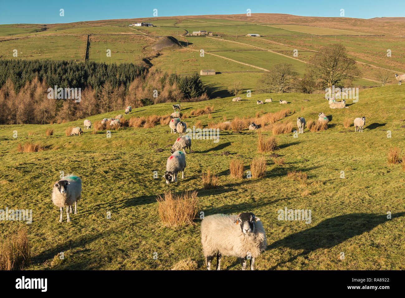 North Pennines AONB landscape, view looking west over the Hudeshope valley in strong winter sunshine and a clear blue sky Stock Photo