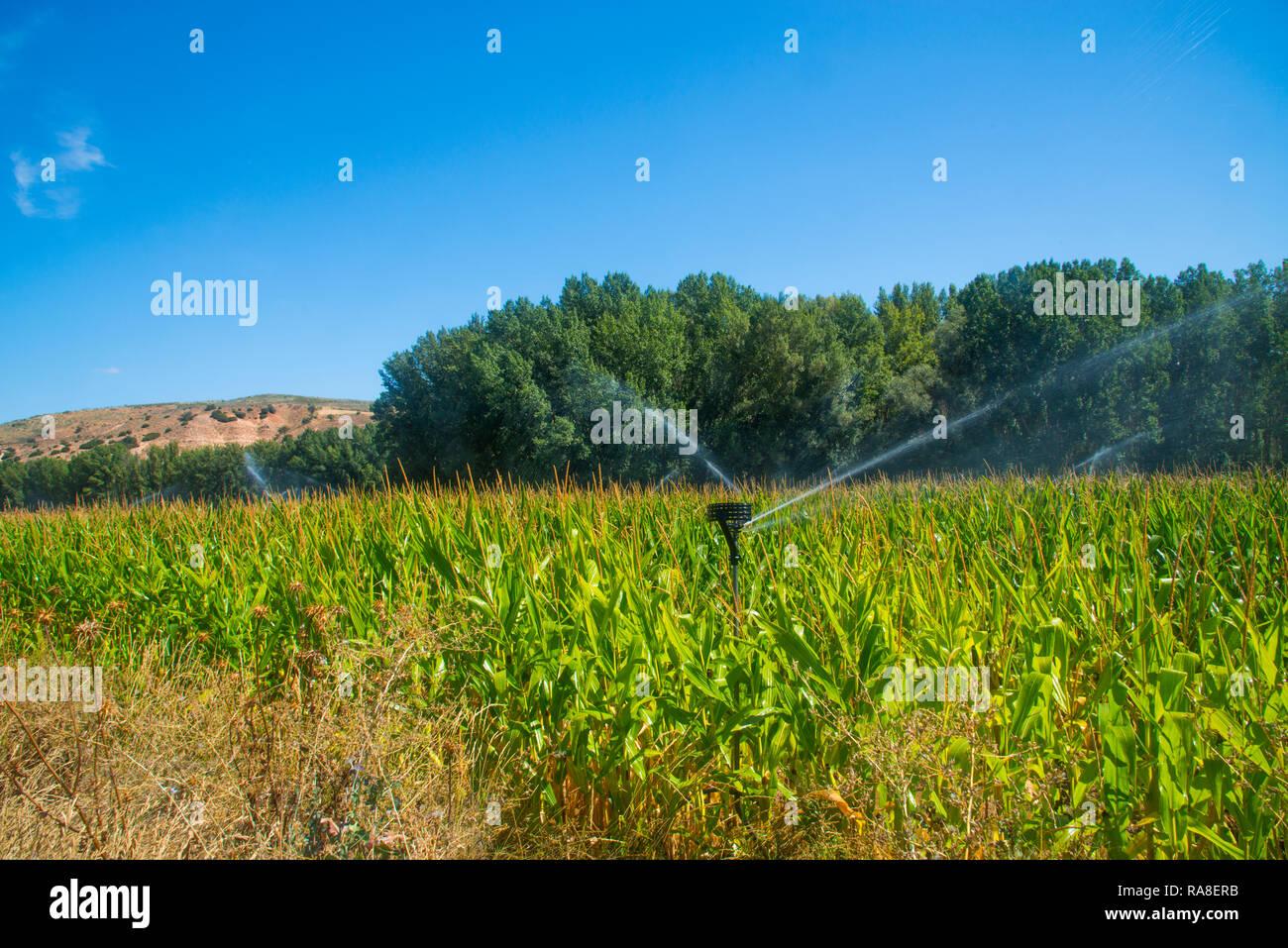 Irrigation system in corn field. La Alcarria, Guadalajara, Spain. - Stock Image