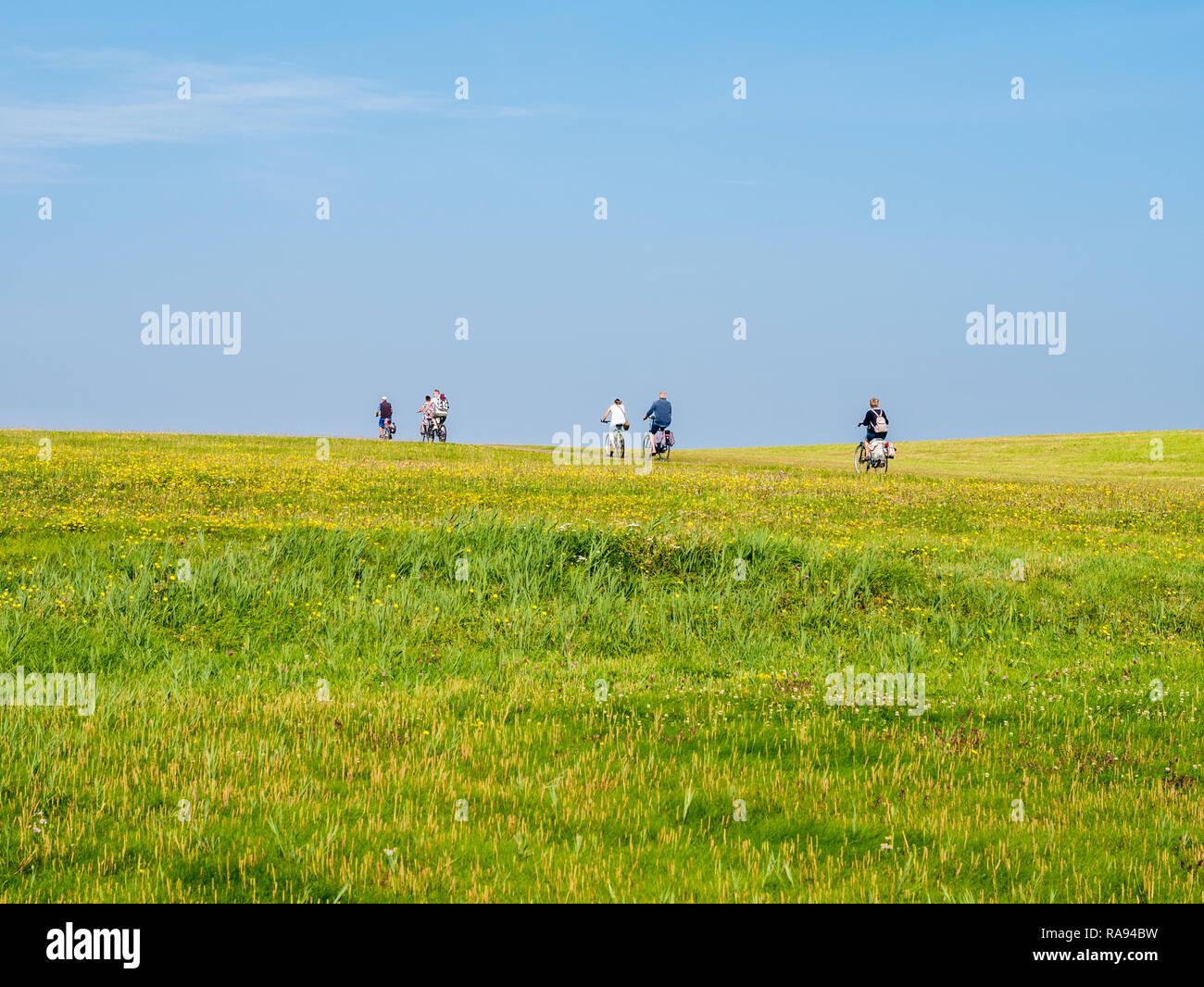 Group of bicyclists cycling on dike with grass field on a sunny day with blue sky, Schiermonnikoog, Netherlands - Stock Image
