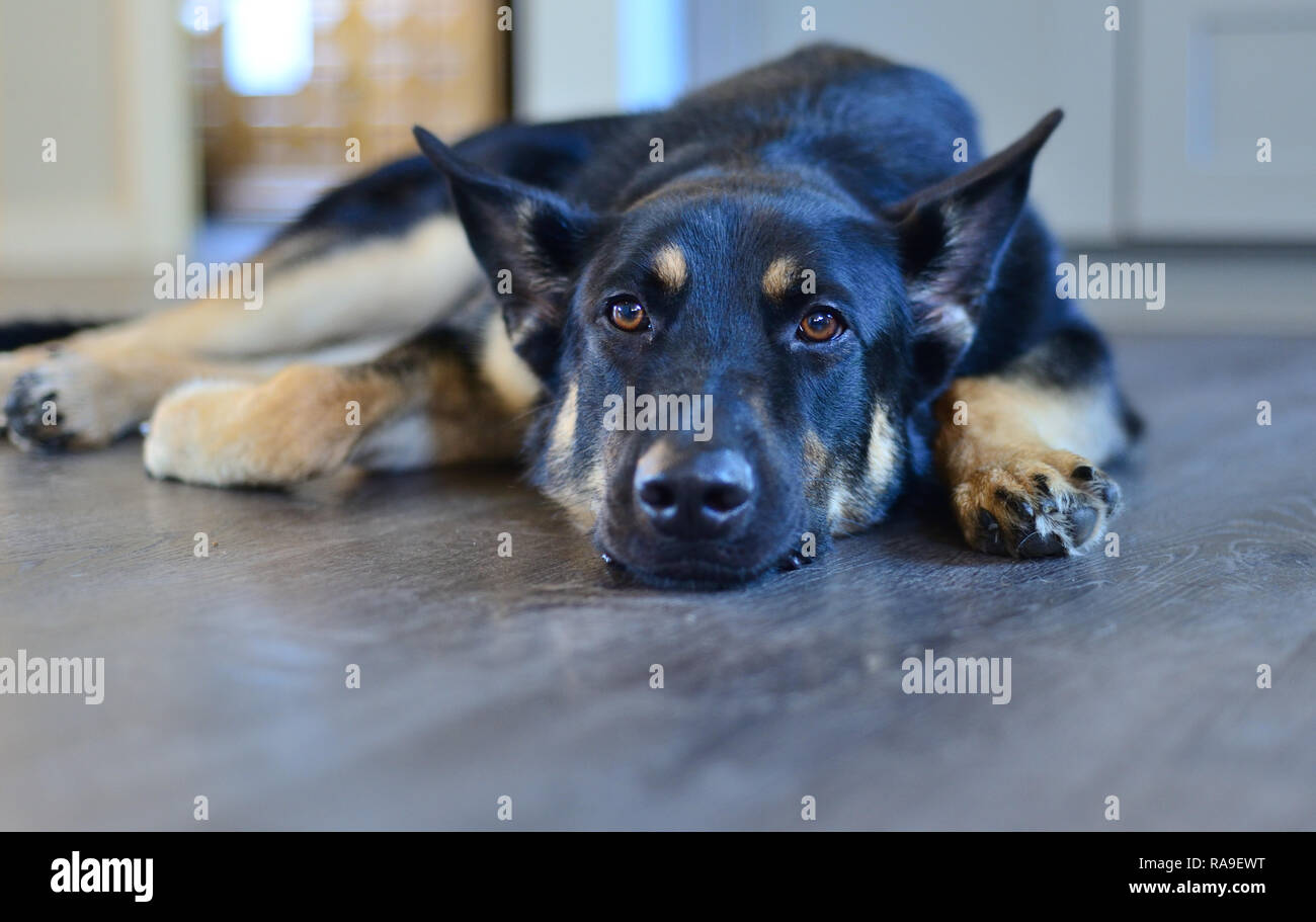 Mans best Friend - Stock Image