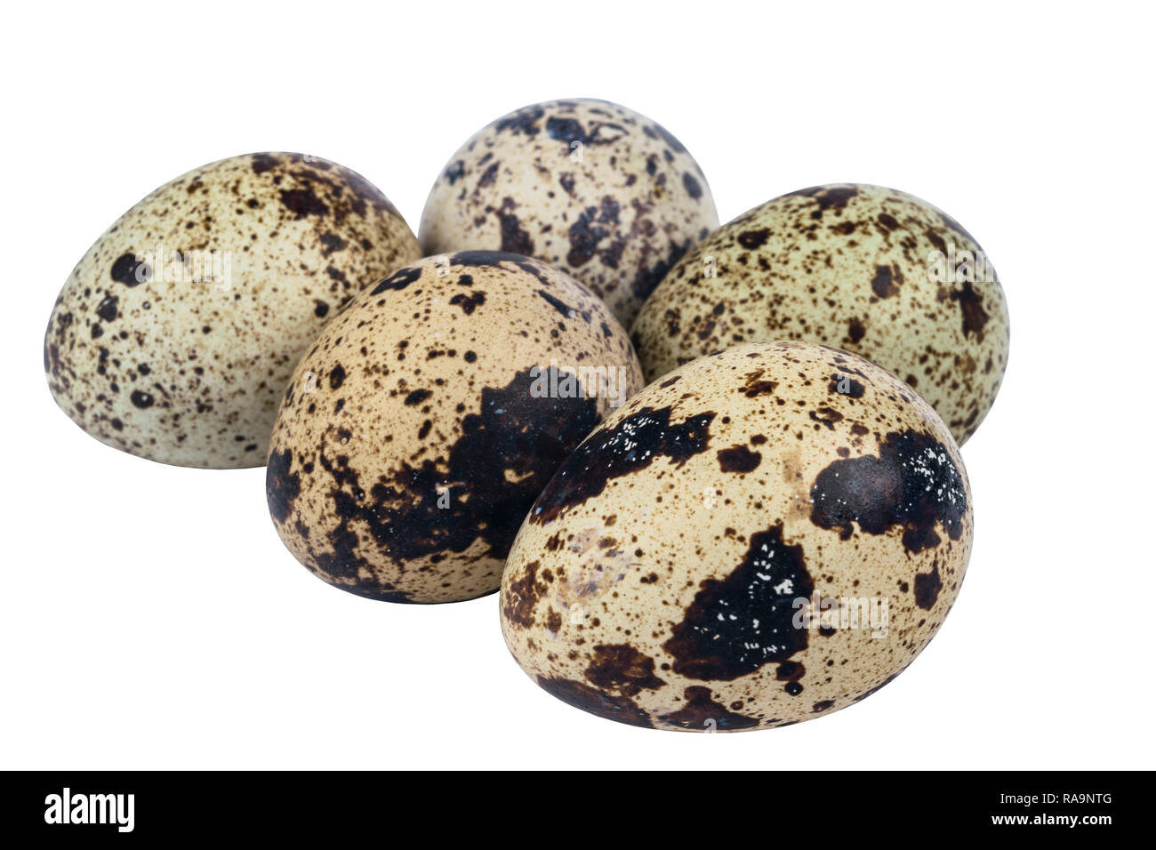 Isolated quail eggs. Big collection of quail eggs isolated on a white background. - Stock Image