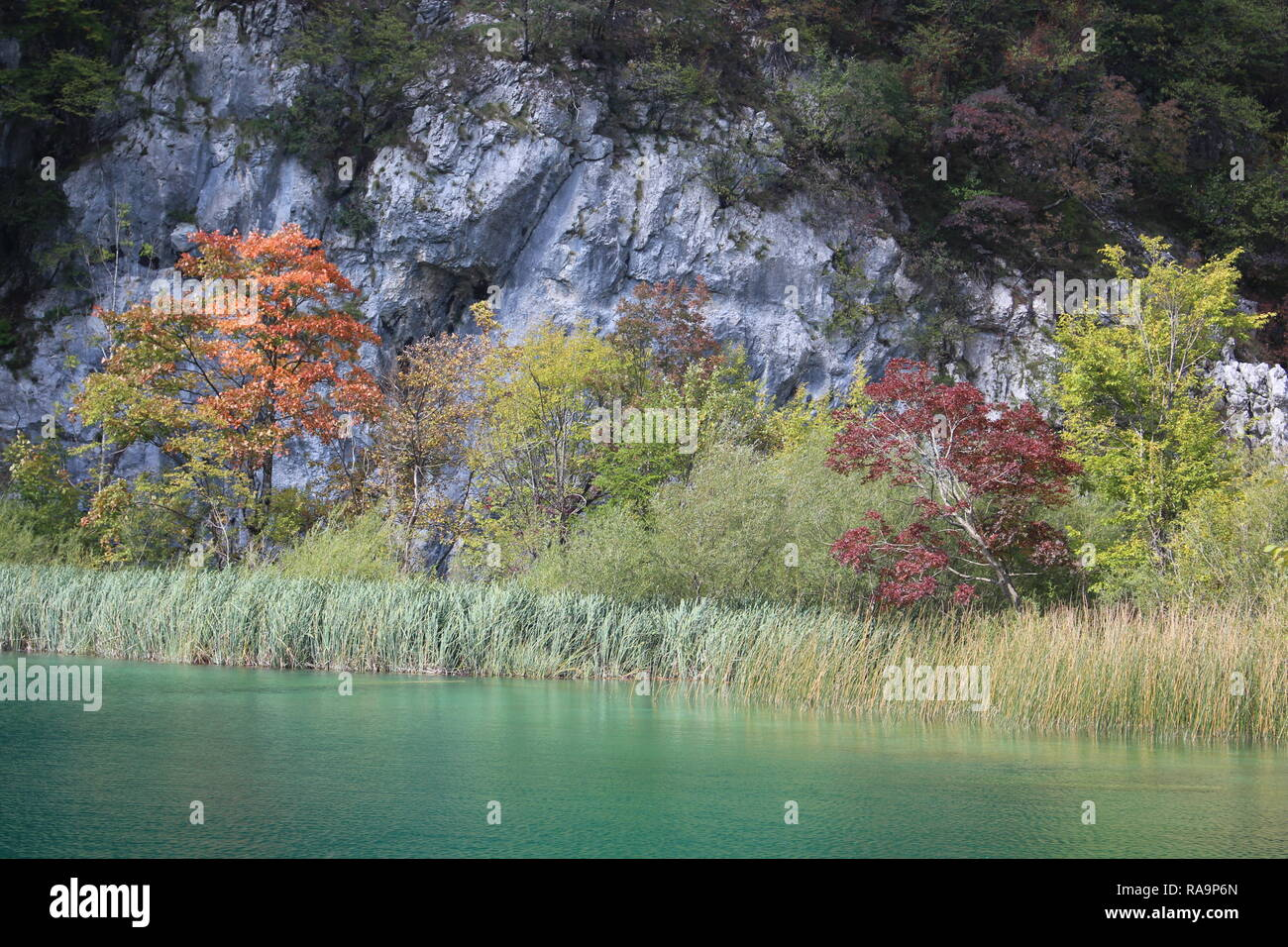 Plitvice Lakes National Park trees in the spring - Stock Image