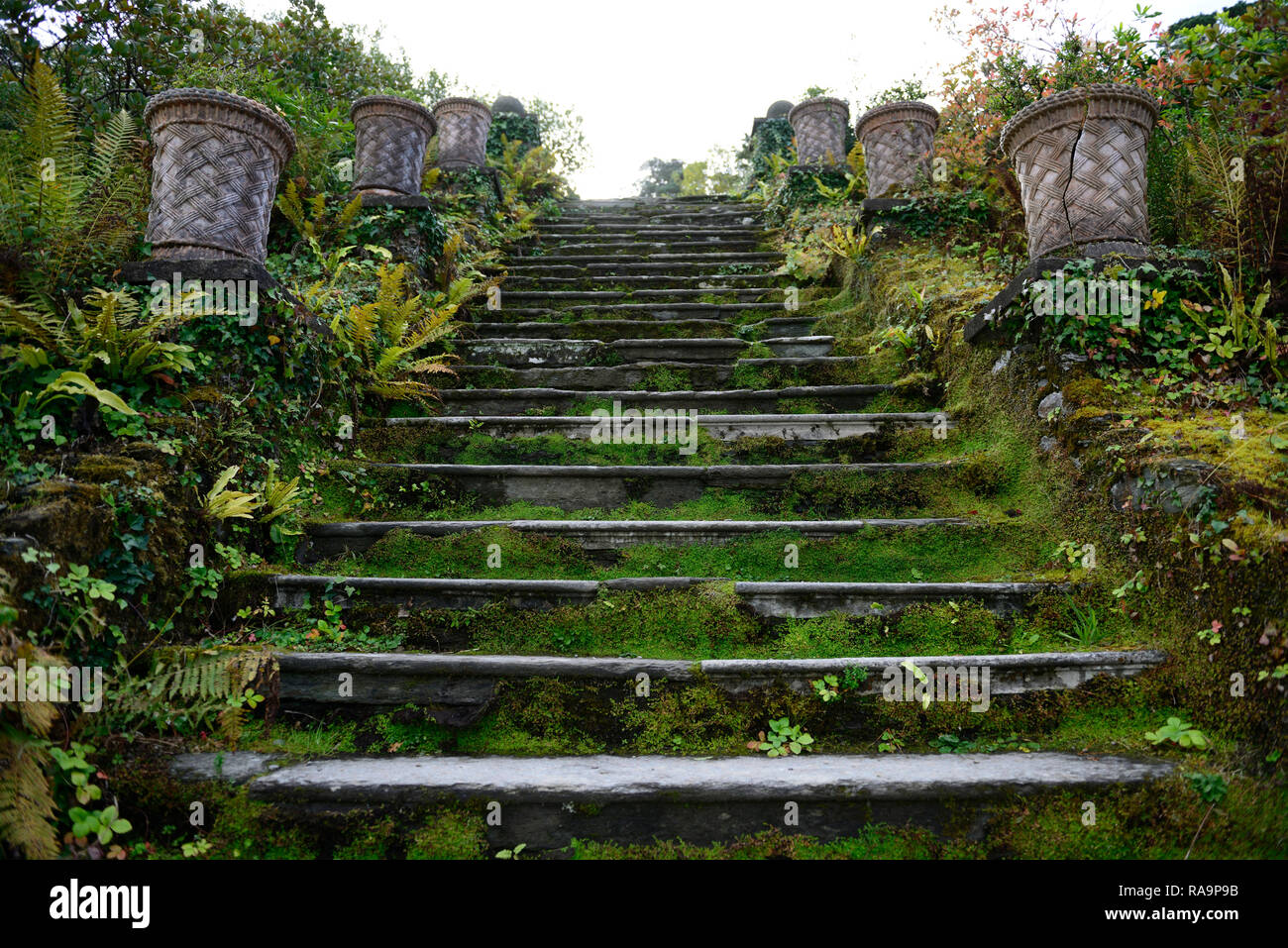 100 steps, one hundred steps,path,pathway,terrace,terraces,terrace,gardens,fern,ferns,moss,cover,covered,Bantry house and Gardens, West Cork Garden Tr - Stock Image