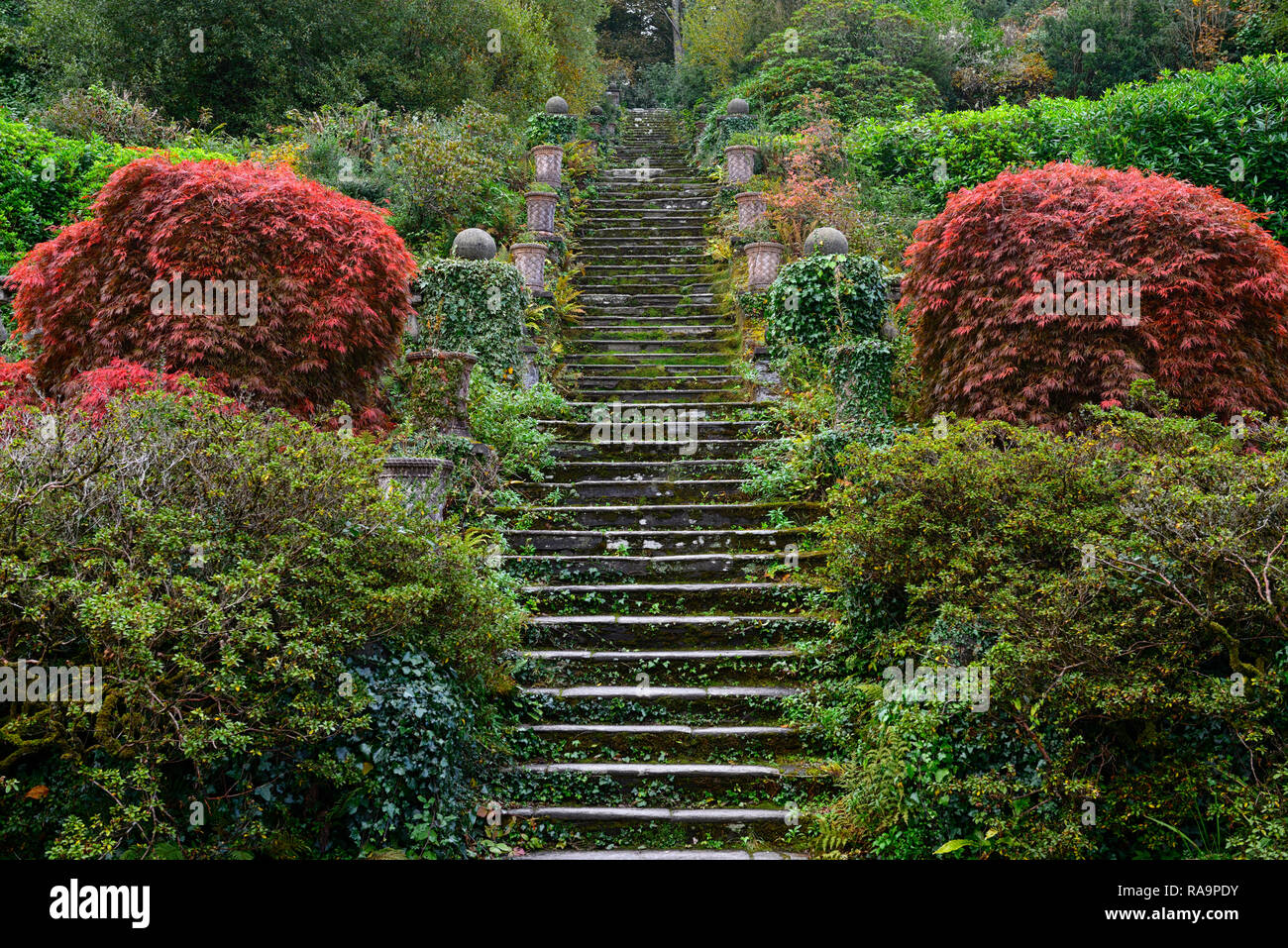 100 steps, one hundred steps,path,pathway,terrace,terraces,acer palmatum,terrace,gardens,Bantry house and Gardens, West Cork Garden Trail,RM Floral - Stock Image