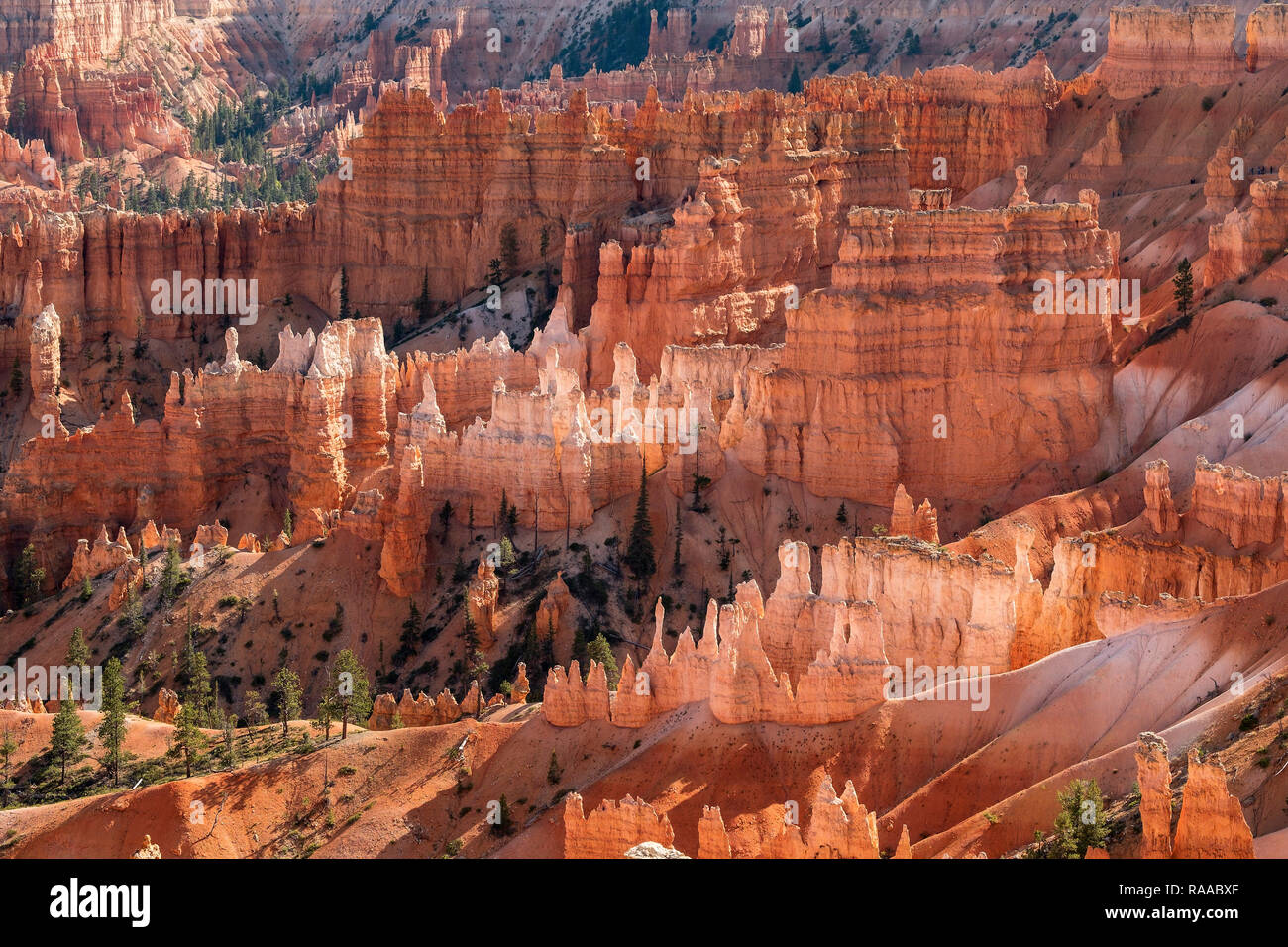 Bryce Canyon National Park, Utah, USA.  The Bryce Amphitheatre showing the Canyon Walls, Fins, Windows and Hoodoo rock formations - Stock Image