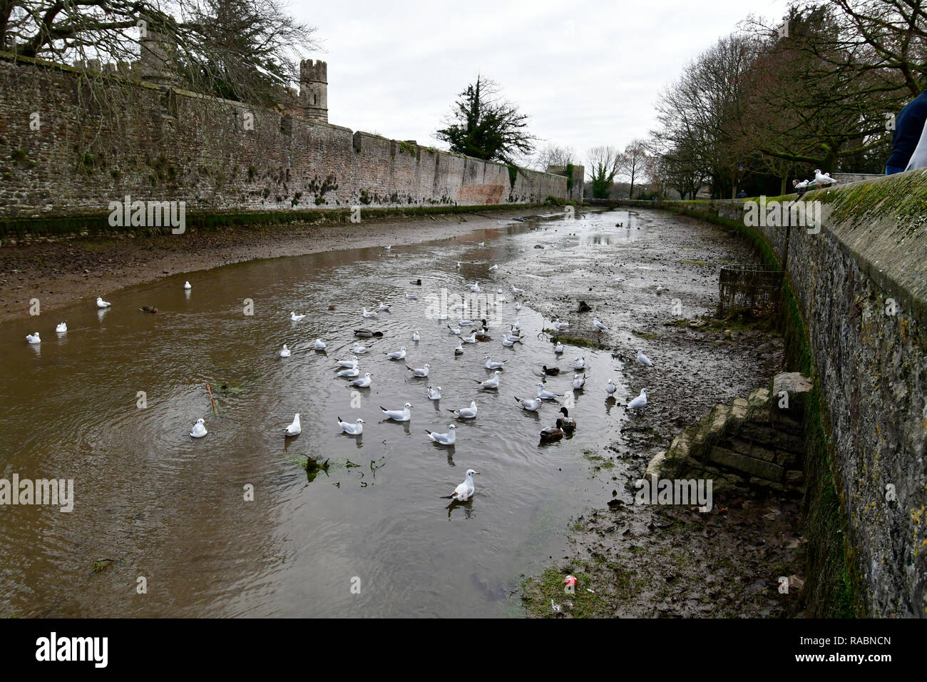 Wells, Somerset, UK. 3rd Jan 2019. Bishop's Palace Moat in Wells Somerset drained on the advice of the Enviornment agency over the New year to reduce the levels of silt and weed. It has not any negitive impact downstream since first starting 10 years ago. Credit: Robert Timoney/Alamy Live News - Stock Image