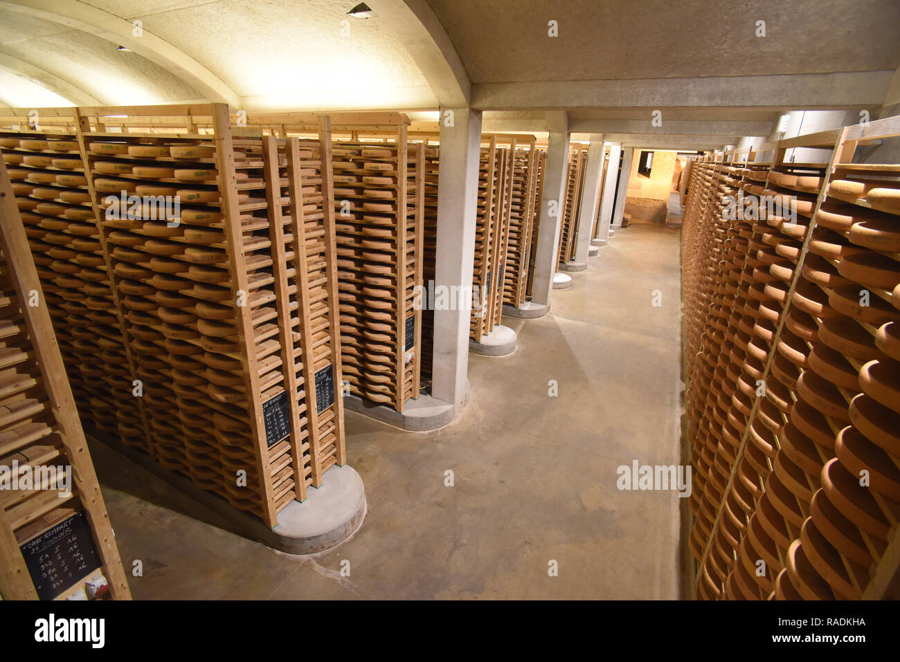 Comte cheese in the 'Petite du Fort Saint-Antoine' maturing cellars (eastern France) *** Local Caption *** - Stock Image