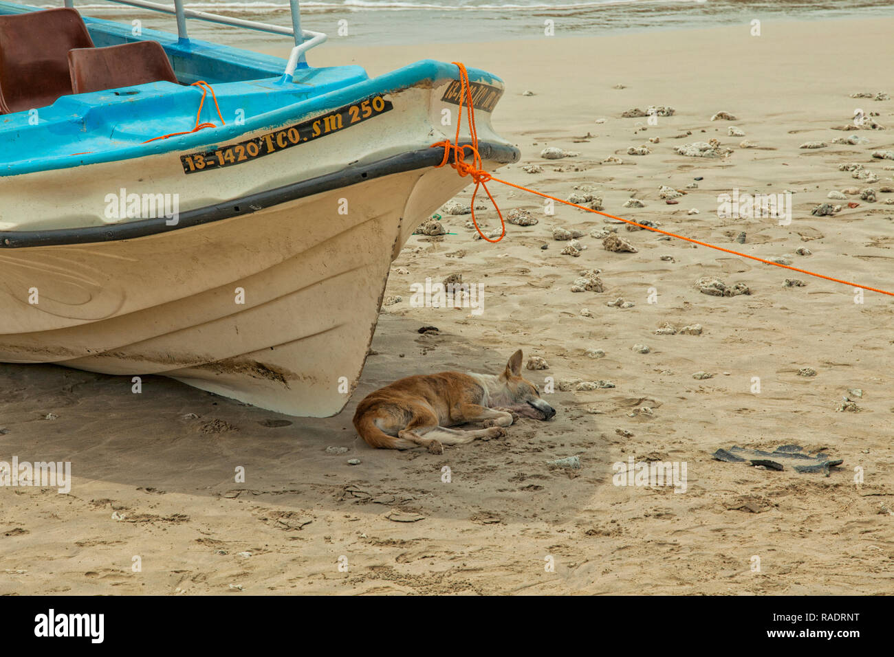 Dog sheltering from the sun in the shade of a local fishing boat on the sandy beach in Trincomalee, Sri Lanka - Stock Image