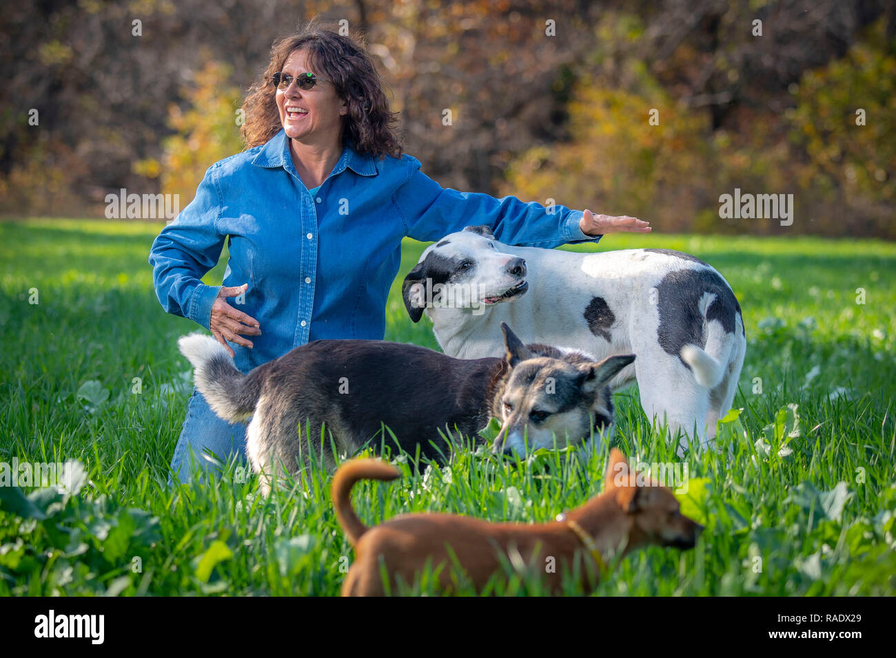 Tammy Higgins, a multi-generational Native American rancher who raises 80 head of cattle on her farm plays with her family dogs in of Okfuskee County, Oklahoma. - Stock Image