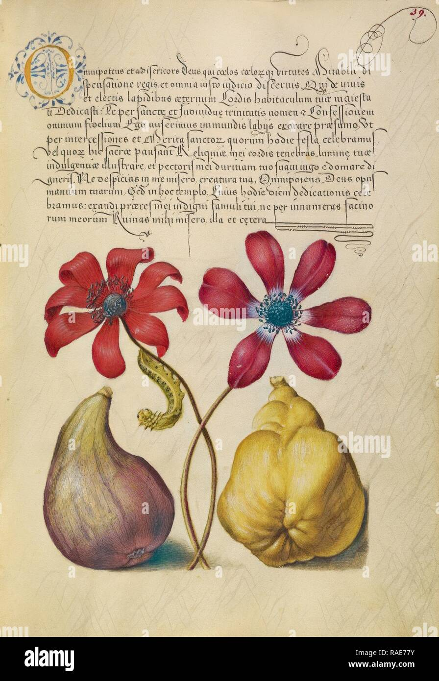 Poppy Anemones, Caterpillar, Fig, and Quince, Joris Hoefnagel (Flemish , Hungarian, 1542 - 1600), and Georg Bocskay ( reimagined Stock Photo