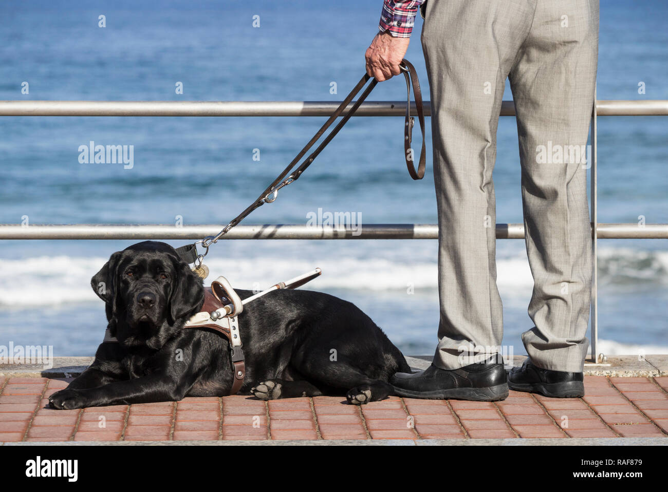 Blind Man Dog Stock Photos & Blind Man Dog Stock Images - Alamy