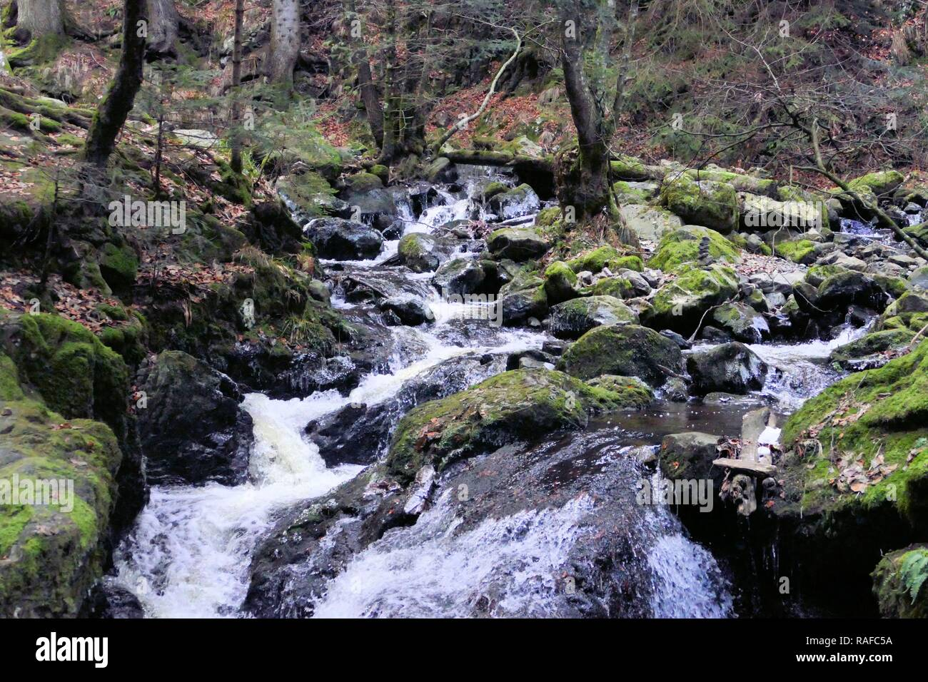 Cold Waters in the Black Forest - Stock Image