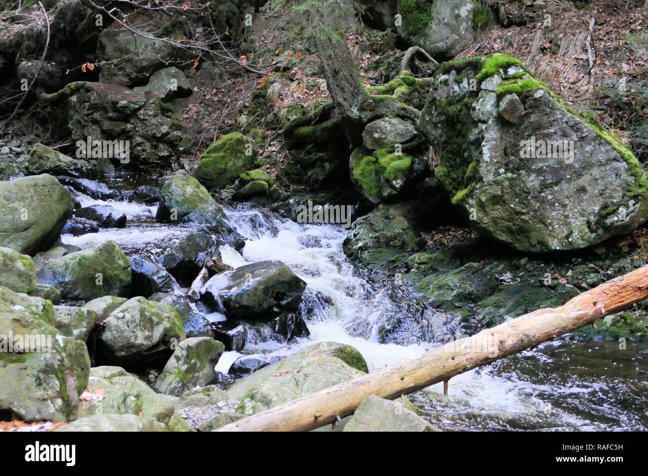 Black Forest Stream - Stock Image