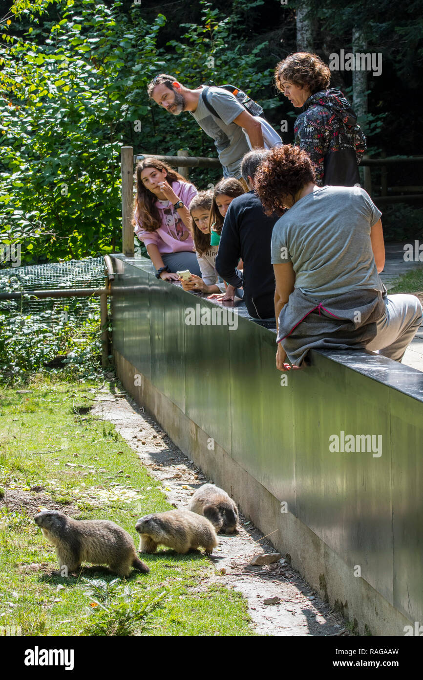 Visitors feeding Alpine marmots (Marmota marmota) in the zoo Aran Park, animal park / zoological garden at Bossost, Lleida, Pyrenees, Catalonia, Spain - Stock Image