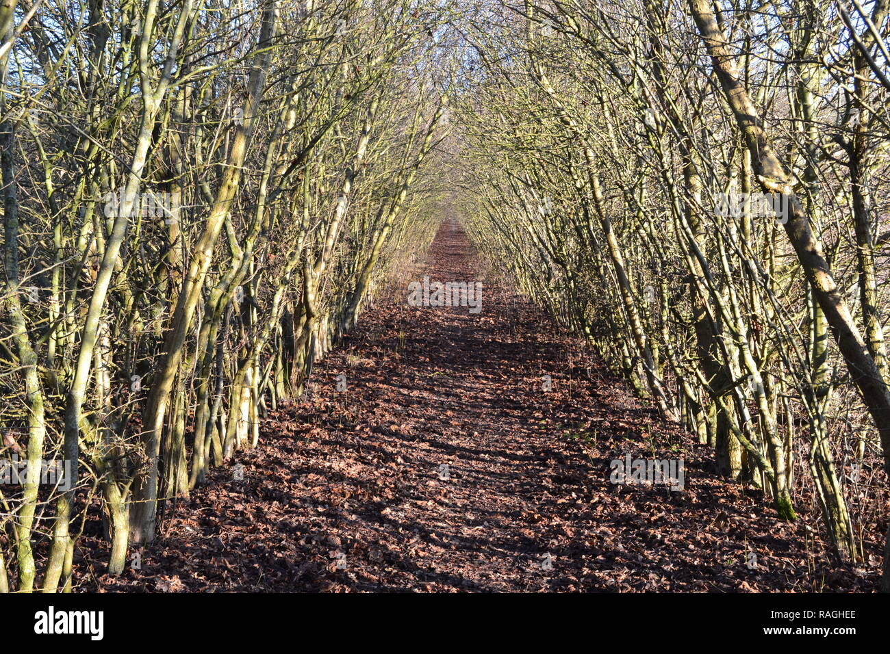 An enticing tree-covered footpath at Austin Lodge leading to Romney Street and Otford, in winter. Countryside in north west Kent, England - Stock Image