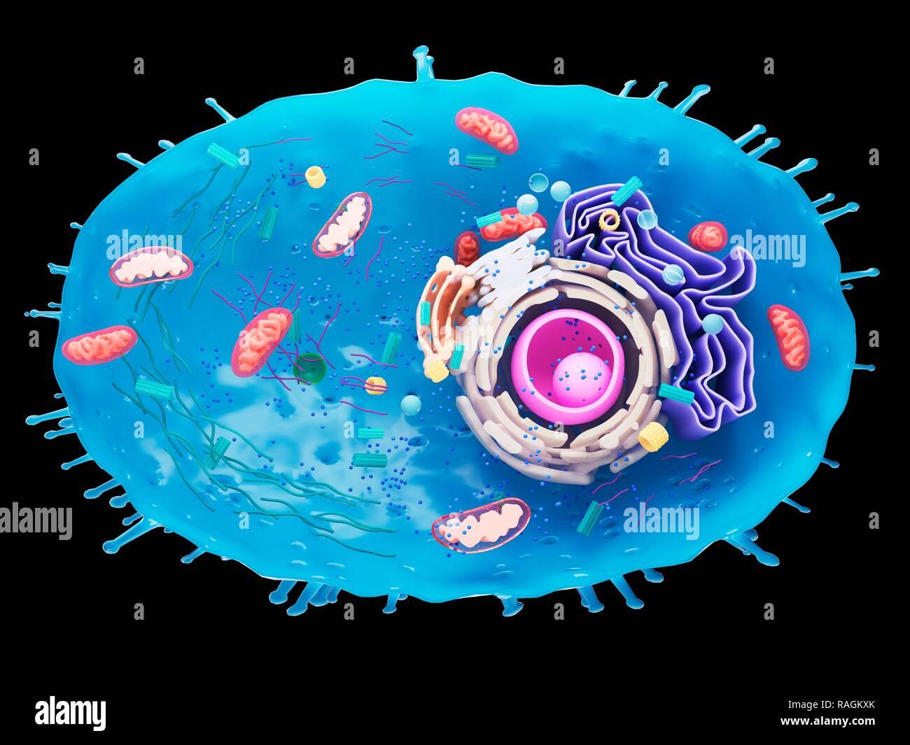 endoplasmic reticulum images.html