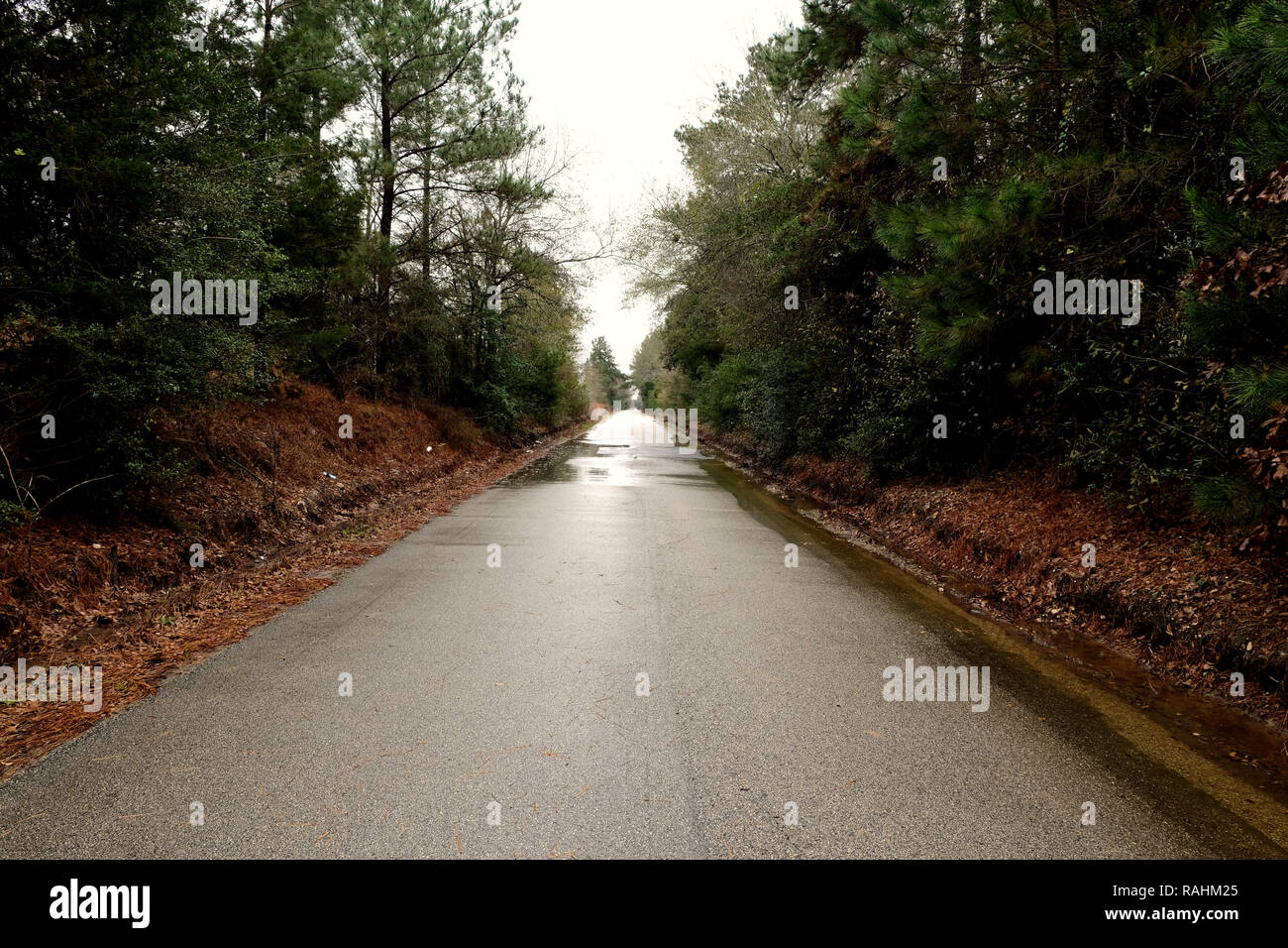 Empty country road in Texas surrounded by trees; pines, oaks; wet road after a rain fall. - Stock Image